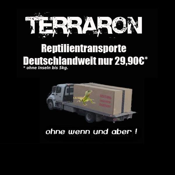 Reptilien Transport